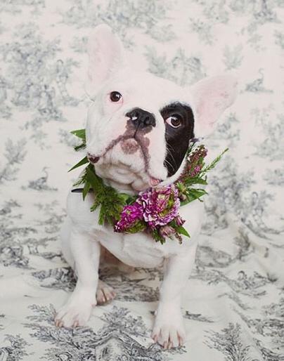 Perros en las bodas