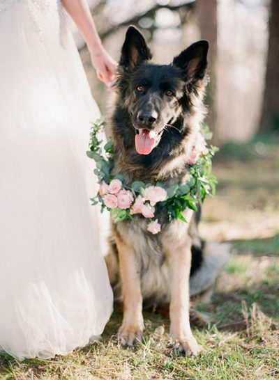Dogs at weddings furry friends