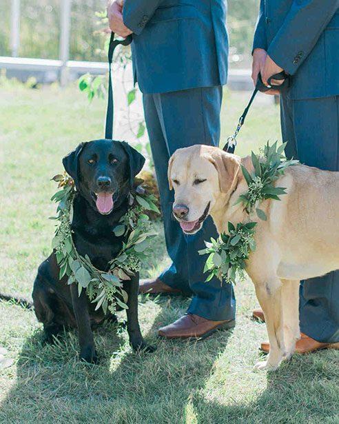 Incluir perros en bodas