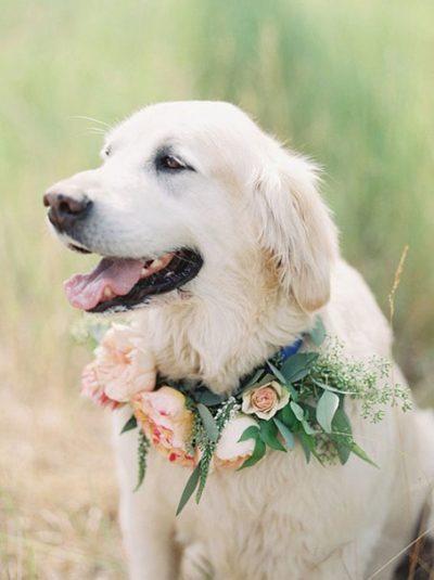 Mascotas en las bodas
