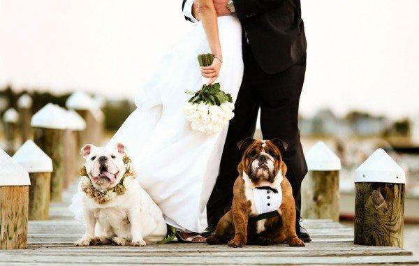 Pupies in weddings